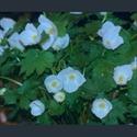 Picture for category Glaucidium